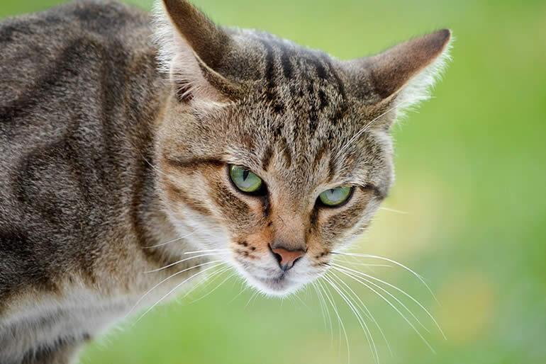 conoce-como-actuar-para-cuidar-la-salud-de-tu-gato-2.jpg