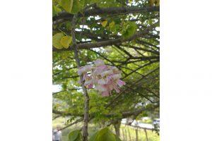 flor-de-cacahuananche-una-revelacion-cosmetica3.jpg