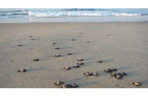 calidas-y-hermosas-playas-ofrece-Tecolutla-veracruz-2.jpg